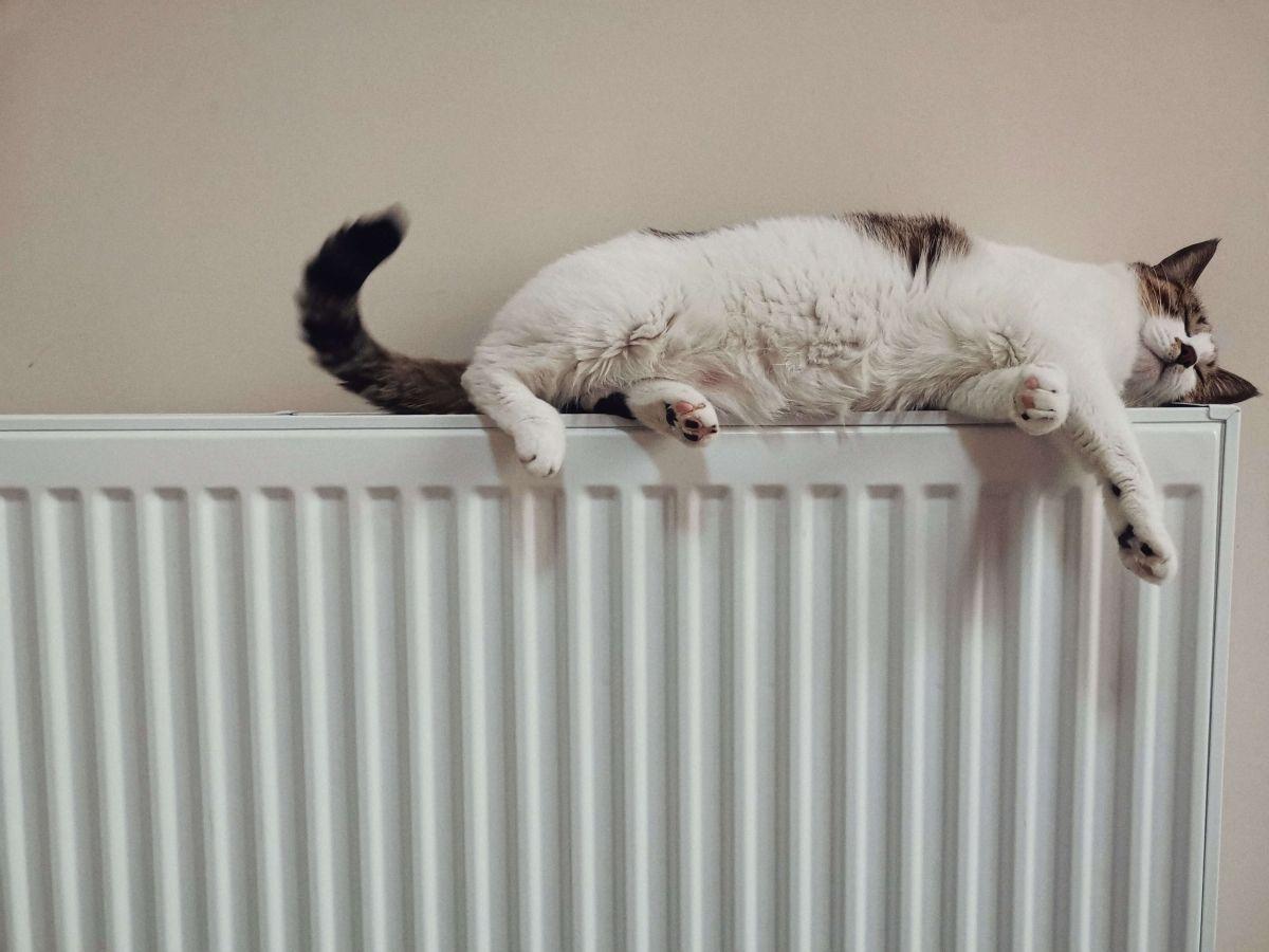 Chat sur le chauffage