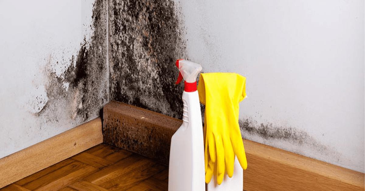 Schimmelwerende producten voor een muur met schimmelplekken