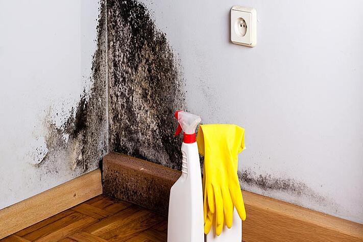 Comment nettoyer les moisissures dans votre maison ?